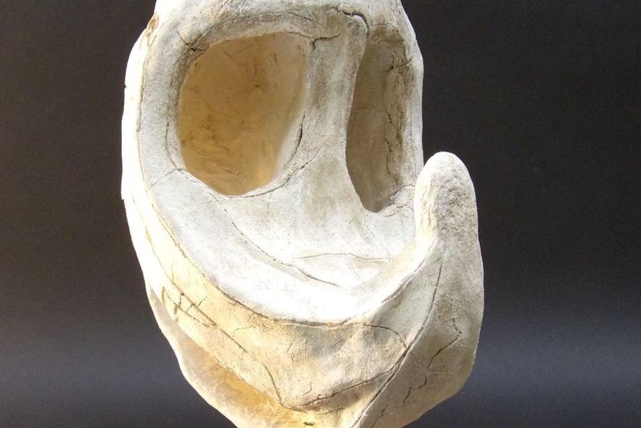 Crash Bandicoots Skull Found